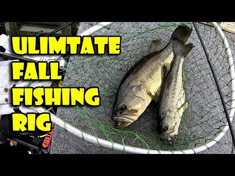 Epic Double Zoom Fluke Rig Catches Two Bass – Fall bass Fishing