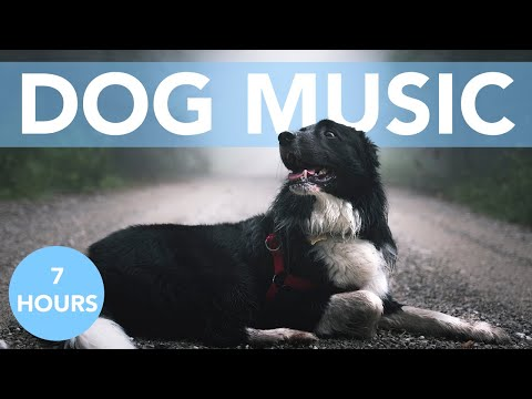 7 HOURS of Thunderstorm Music for Anxious Dogs!