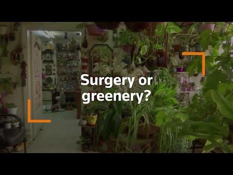 Jordanian doctor transforms clinic into garden