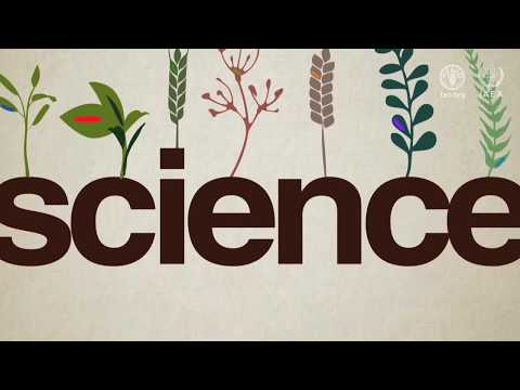 Using nuclear science in marker-assisted plant breeding