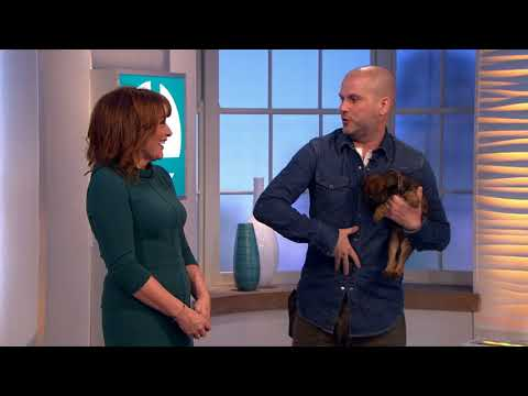 Show Two. Steve Mann Dog Trainer on TV show with puppy Border Terrier
