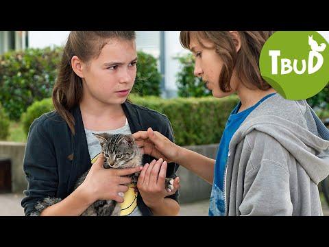 Bauchgefuhl Folge 66 Tiere Bis Unters Dach Swr Kindernetz Youtube