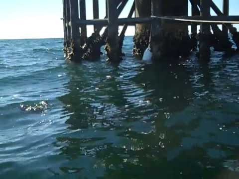 Fishing sabine pass rigs with krs 11 07 2012 youtube for Sabine pass fishing report
