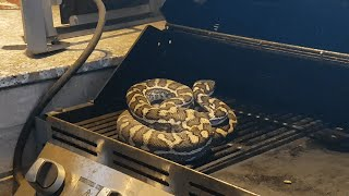Snake on Grill