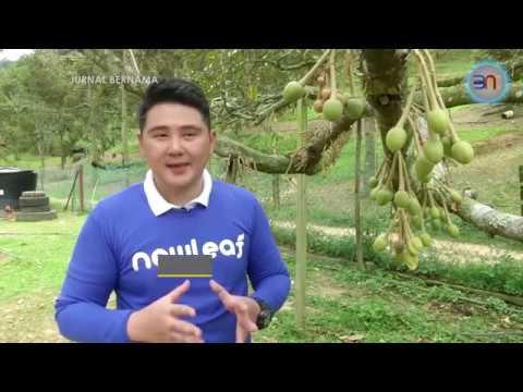JURNAL BERNAMA Newleaf Perkukuh Pasaran Durian Ke China