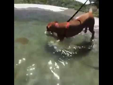 Fun Dog Vine: Water dog!