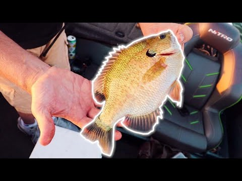 Pan Fishing With MICRO Lures & Light Tackle (Fill The Freezer)