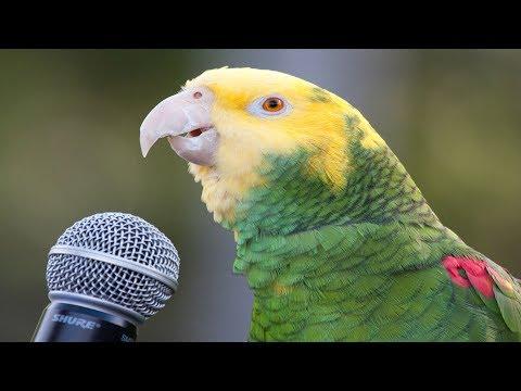 Dünyanın EN İYİ Konuşan 10 Papağan Türü