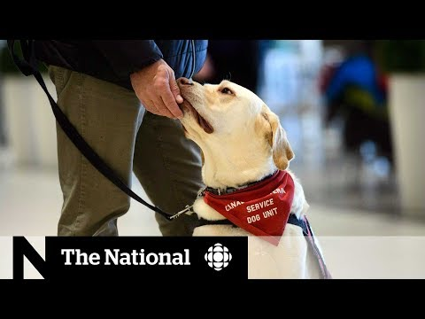 service-dogs-won't-get-funding-without-a-national-standard
