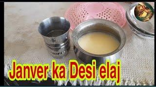 Desi Treatment Agr Janver Sapra Wala Phata Kha La Too Kasa Thke Hoga @SJ Dairy Farm
