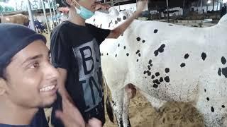 Malir Cow Mandi Live Soda 2020 | Malir Mandi Cattle Farm 2020