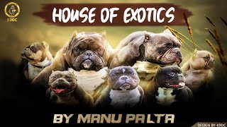 HOUSE OF EXOTICS | DOG KENNEL | MANU PALTA | PROFESSIONAL AMERICAN BULLY BREED | AM BULLY |SCOOBERS