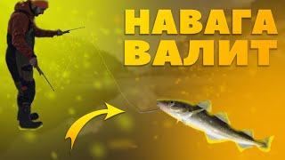 Зимняя рыбалка 2021 рыба валит рыбак кайфует Fishing