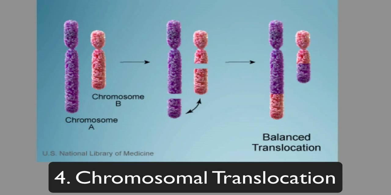 Chromosome Ring
