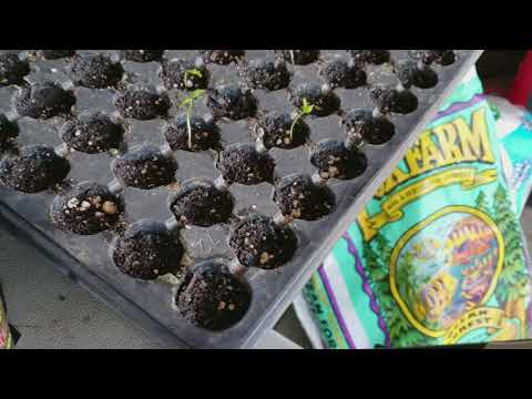 Growing Methods for Starter Chile Plants 2018
