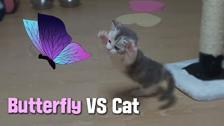 The First Reaction of a Kitten to a Butterfly, the Hunting Instinct!