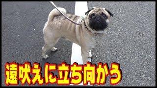 インスタグラム ↓ https://www.instagram.com/dy2016s/?hl=ja 突然、犬...