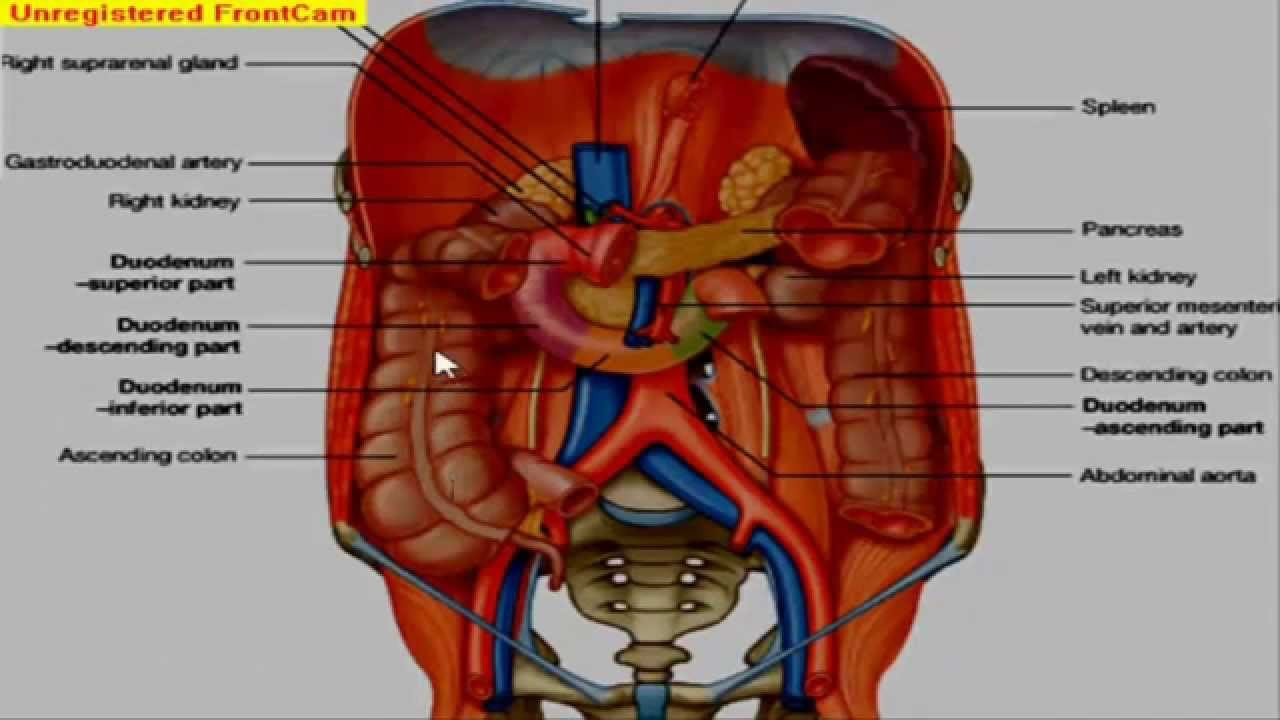 GIT Anatomy - Large Intestine - YouTube