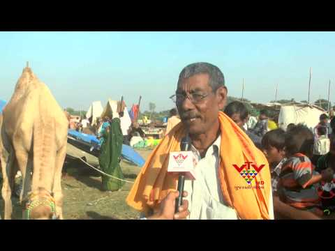 CAMEL AND DONKEY SOLD IN VAUTHA FAIR - VTV