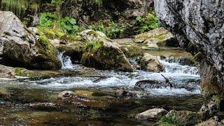 เสียงธรรมชาติคลายเครียด Relax sound , Nature sound and Water sound