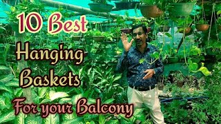 10-best-permanent-hanging-basket-plants-for-balcony-and-prices