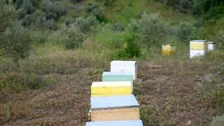 Μελισσοκομία Σπολάιτας Αγρίνιο 2