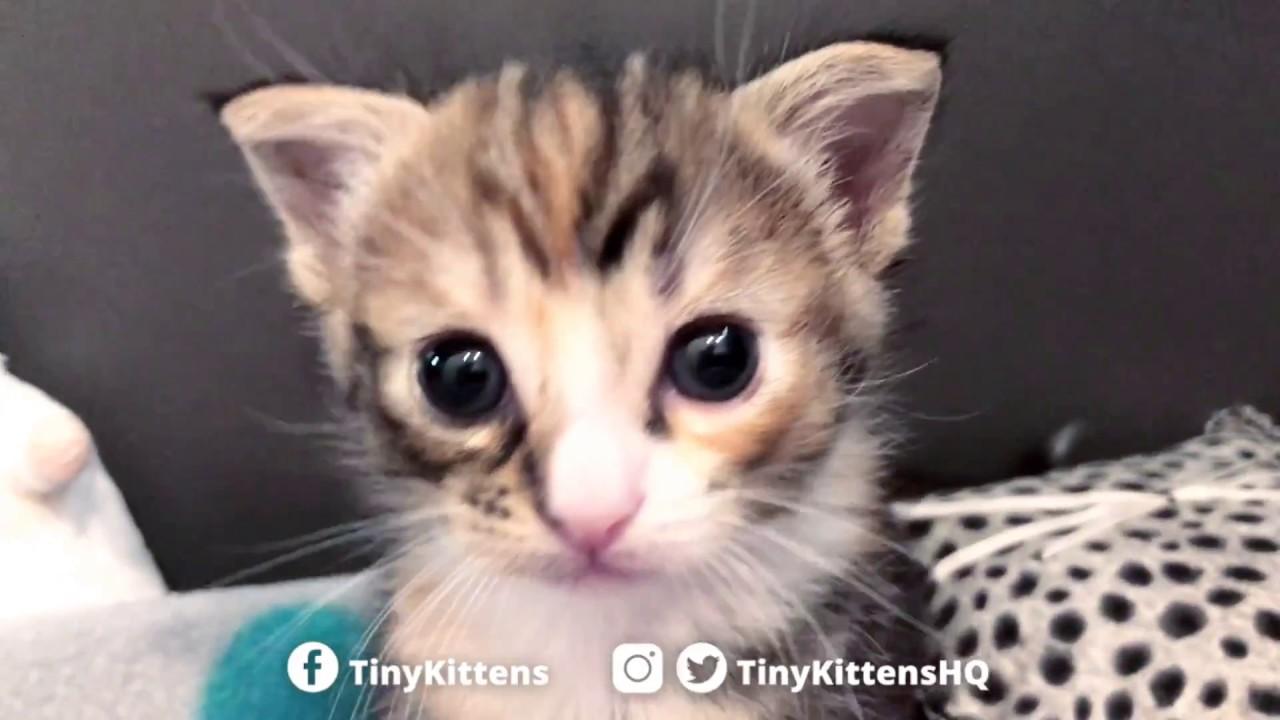 Adorable battle between tiny kittens!  TinyKittens.com