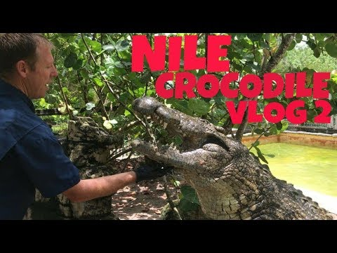 Thumbnail: Jack & the Nile Crocodiles!