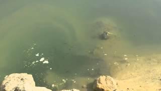 شاهد : أول ظهور للأسماك  فى قناة السويس الجديدة والعمال يعزمون السيسي !!