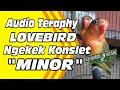 Audio Teraphy Lovebird Konslet Minor  Mp3 - Mp4 Download