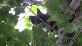 Cat stuck in a tree rescue
