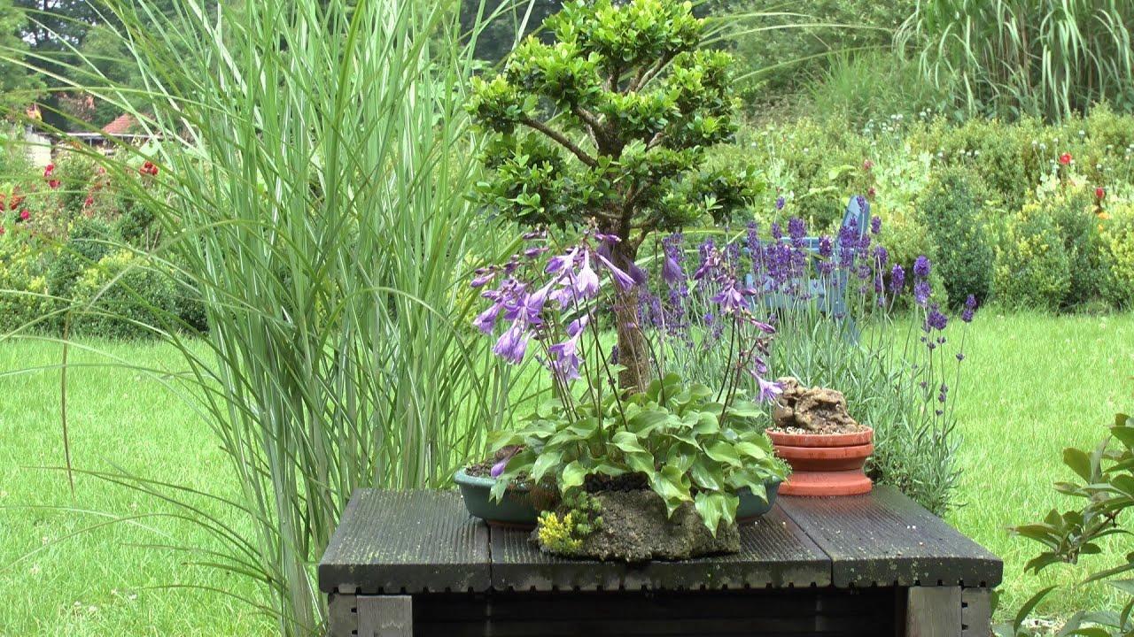 moos vermehren f r bonsai und zur dekoration moss for bonsai youtube. Black Bedroom Furniture Sets. Home Design Ideas
