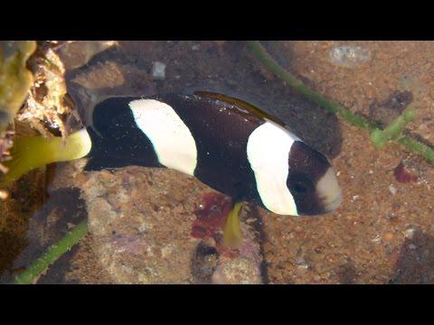 Port Hedland - Low Tide