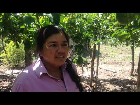 Testimonial World Food Programme: two yields with Groasis Waterboxx® plant cocoon within 1 year