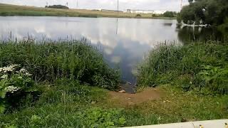 Озеро Стайки у д.Ельница (Н9050). Видеосюжет. Рыбалка.