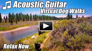 Guitar Acoustic Instrumental Virtual Walking Tour DOG WALKS RIVER Treadmill Video Walk at home Relax