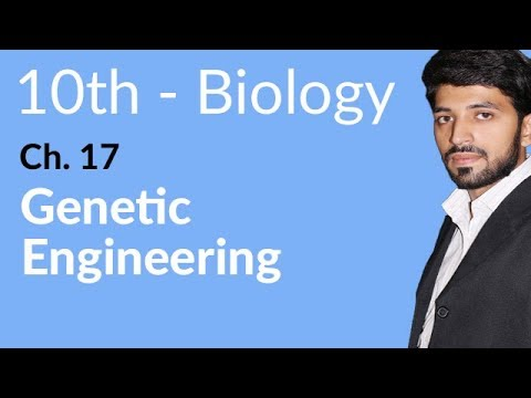 Genetic Engineering - Biology Chapter 17 Biotechnology - 10th Class