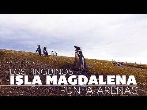 Tour Isla Magdalena, Punta Arenas; pingüinos y más - GoCarlos