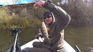 Как Где и На Что Ловить Окуня Осенью Сезон Окуневой Рыбалки Открыт