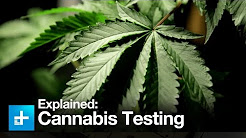 High Tech: Inside a Cannabis Testing Lab