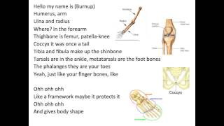 Parts of the Skeleton Song