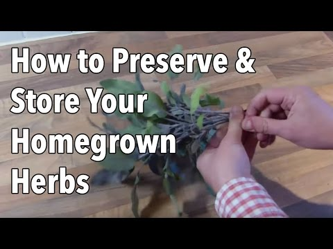Preserving Herbs: How to Preserve & Store Your Homegrown Herb Cuttings