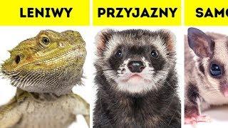 Który zwierzak pasuje do twojej osobowości?
