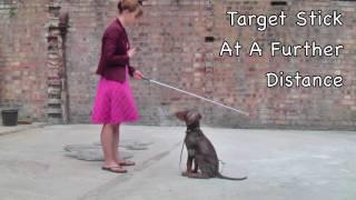 Target Stick Training