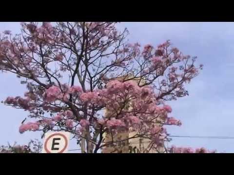 Vivero alegr a arboles frutales doovi for Viveros arboles ornamentales