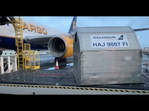 A horse leaves Iceland - from stable to plane