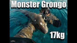 Monster Grongo 17 kg