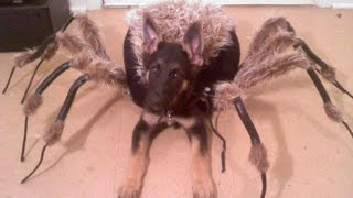 Mutant Spider Dog (SA Wardega)