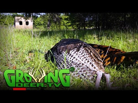 Turkey Hunting, Kansas Double Down   How To Get More From Food Plots (#391) @GrowingDeer.tv