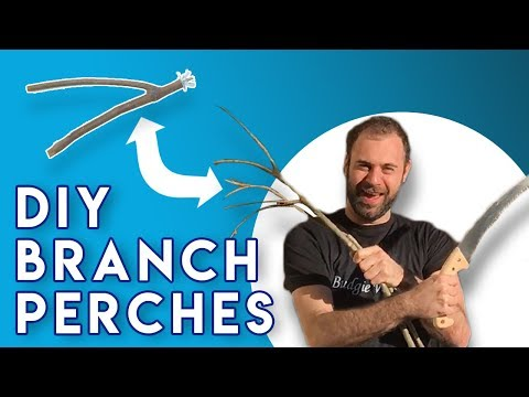 10 Steps How To Make Natural Branch Perches For Parrots (DIY)